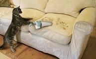 Работа клининговой компании по уборке при наличии в доме животных